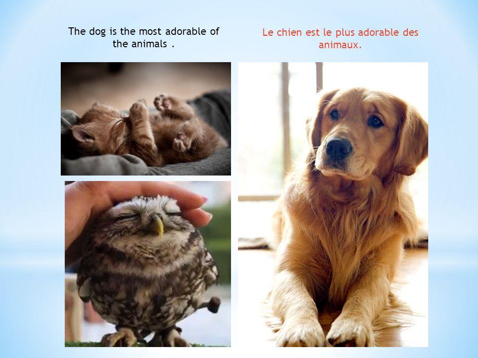The dog is the most adorable of the animals. Le chien est le plus adorable des animaux.