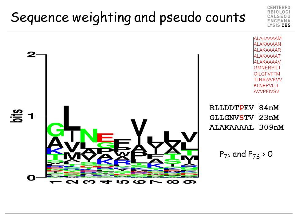 Sequence weighting and pseudo counts RLLDDTPEV 84nM GLLGNVSTV 23nM ALAKAAAAL 309nM P 7P and P 7S > 0 ALAKAAAAM ALAKAAAAN ALAKAAAAR ALAKAAAAT ALAKAAAAV