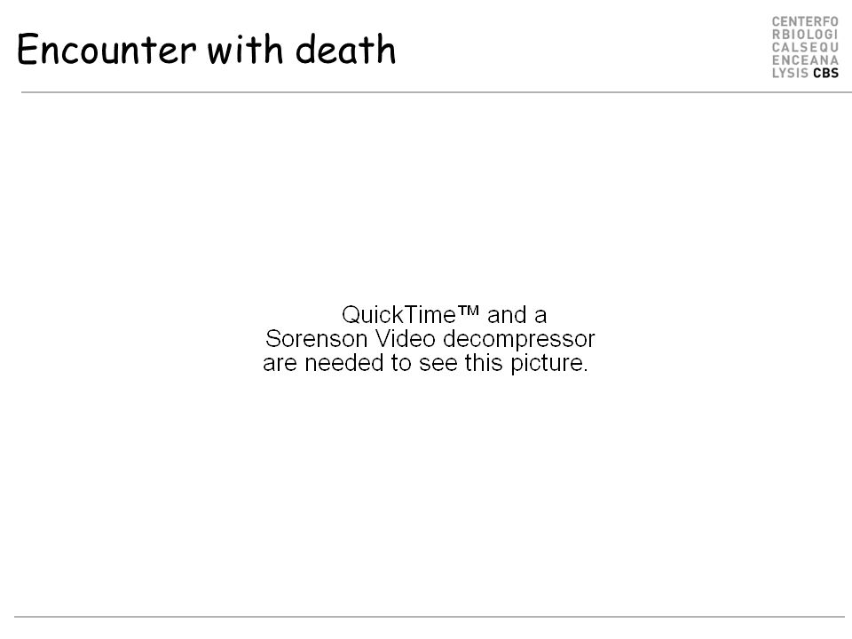 Encounter with death