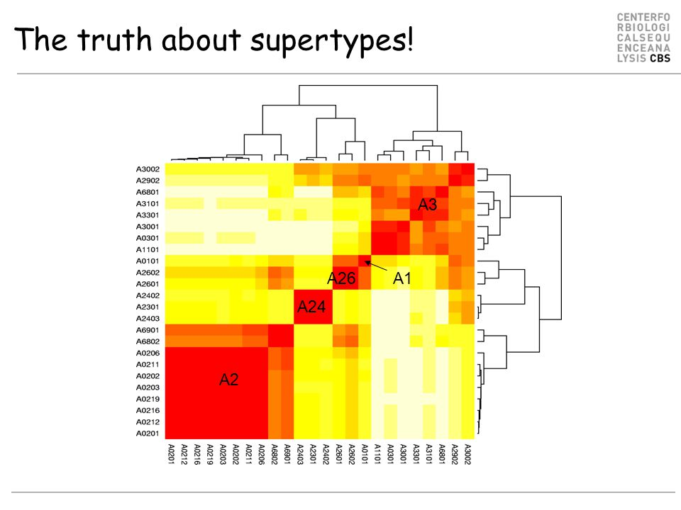 The truth about supertypes! A2 A24 A26 A3 A1