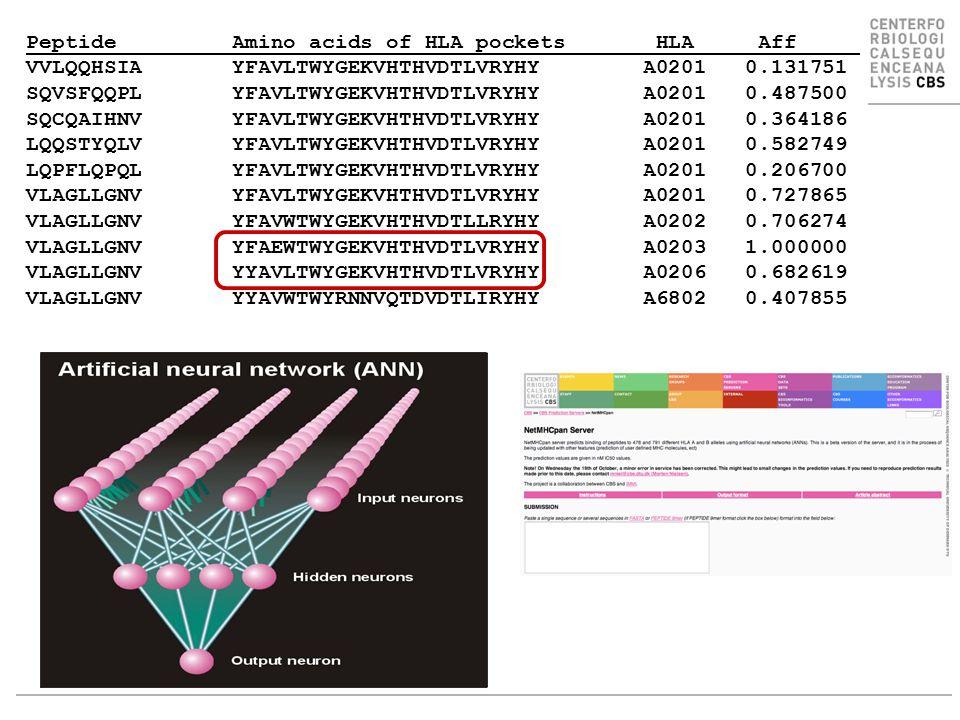 Example Peptide Amino acids of HLA pockets HLA Aff VVLQQHSIA YFAVLTWYGEKVHTHVDTLVRYHY A0201 0.131751 SQVSFQQPL YFAVLTWYGEKVHTHVDTLVRYHY A0201 0.487500 SQCQAIHNV YFAVLTWYGEKVHTHVDTLVRYHY A0201 0.364186 LQQSTYQLV YFAVLTWYGEKVHTHVDTLVRYHY A0201 0.582749 LQPFLQPQL YFAVLTWYGEKVHTHVDTLVRYHY A0201 0.206700 VLAGLLGNV YFAVLTWYGEKVHTHVDTLVRYHY A0201 0.727865 VLAGLLGNV YFAVWTWYGEKVHTHVDTLLRYHY A0202 0.706274 VLAGLLGNV YFAEWTWYGEKVHTHVDTLVRYHY A0203 1.000000 VLAGLLGNV YYAVLTWYGEKVHTHVDTLVRYHY A0206 0.682619 VLAGLLGNV YYAVWTWYRNNVQTDVDTLIRYHY A6802 0.407855