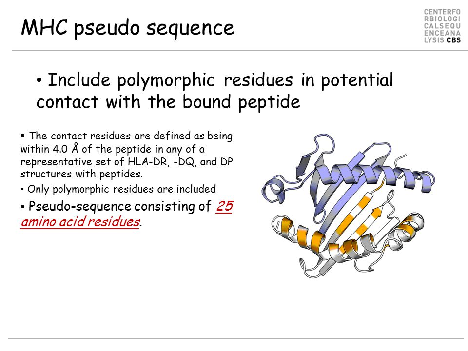 MHC pseudo sequence The contact residues are defined as being within 4.0 Å of the peptide in any of a representative set of HLA-DR, -DQ, and DP structures with peptides.