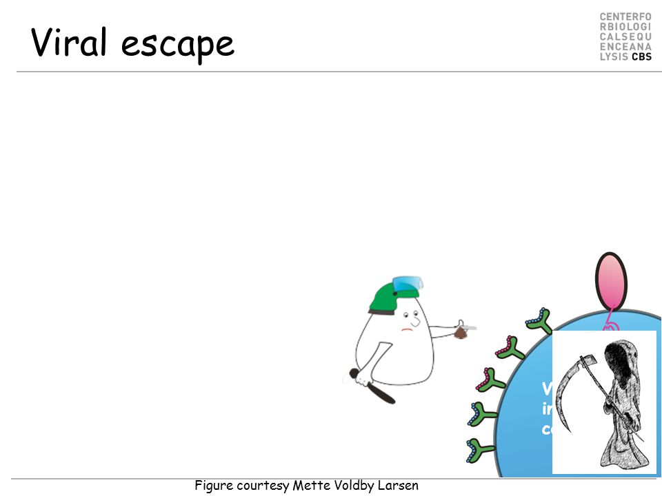 Viral escape Figure courtesy Mette Voldby Larsen