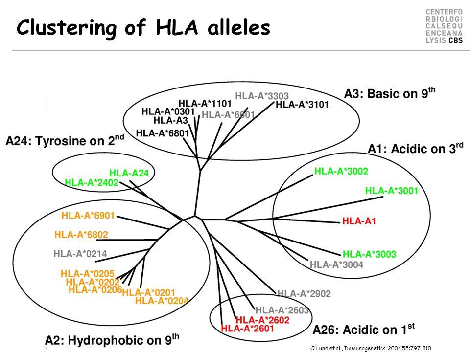 Clustering of HLA alleles O Lund et al., Immunogenetics. 2004 55:797-810
