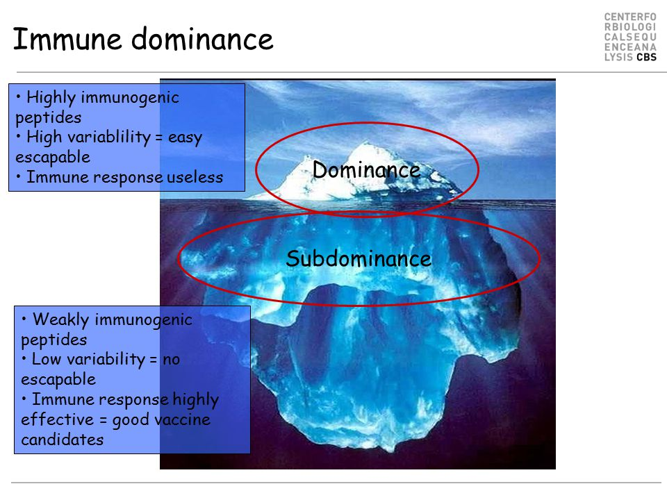Immune dominance Dominance Highly immunogenic peptides High variablility = easy escapable Immune response useless Subdominance Weakly immunogenic peptides Low variability = no escapable Immune response highly effective = good vaccine candidates