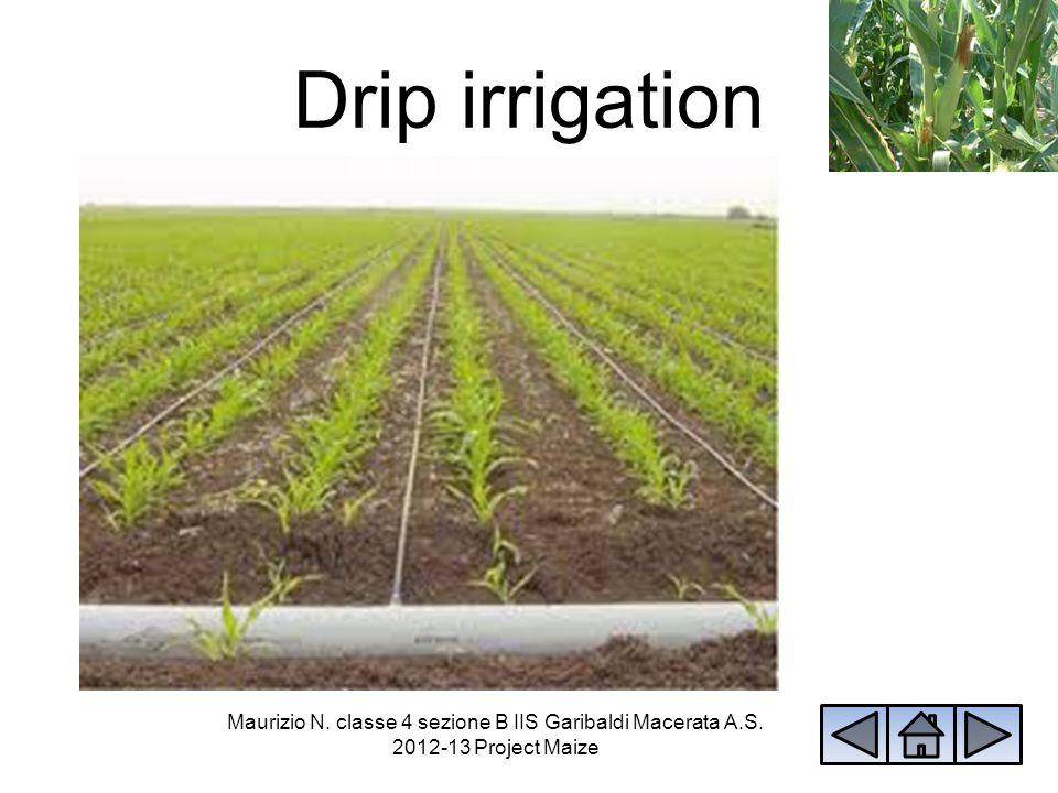 Drip irrigation Maurizio N. classe 4 sezione B IIS Garibaldi Macerata A.S. 2012-13 Project Maize