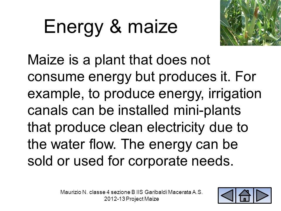 Energy & maize Maize is a plant that does not consume energy but produces it. For example, to produce energy, irrigation canals can be installed mini-