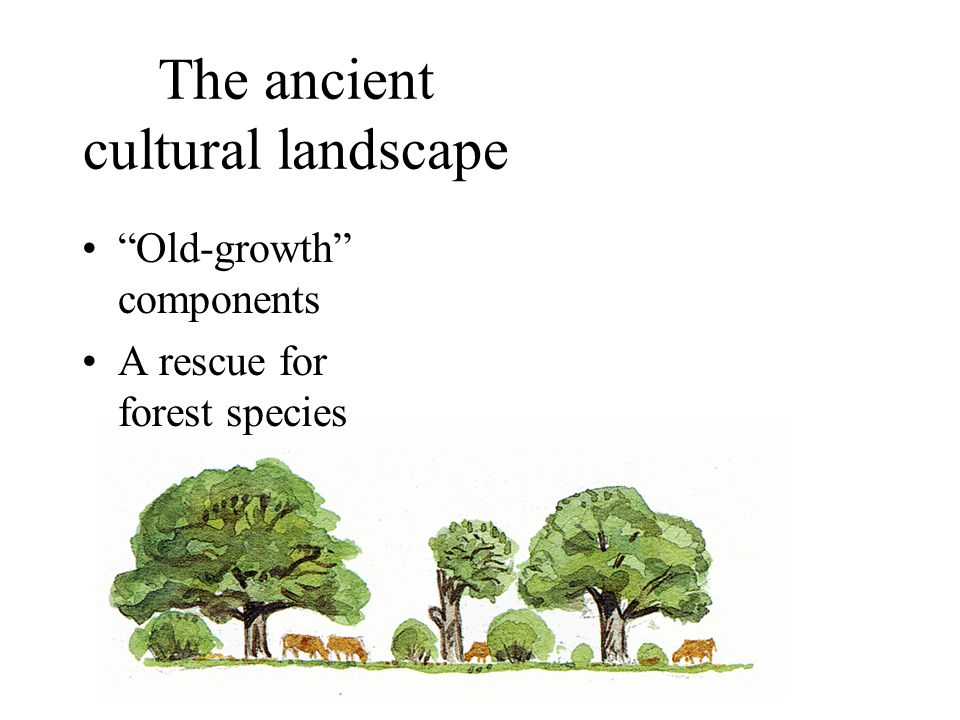 "The ancient cultural landscape ""Old-growth"" components A rescue for forest species"