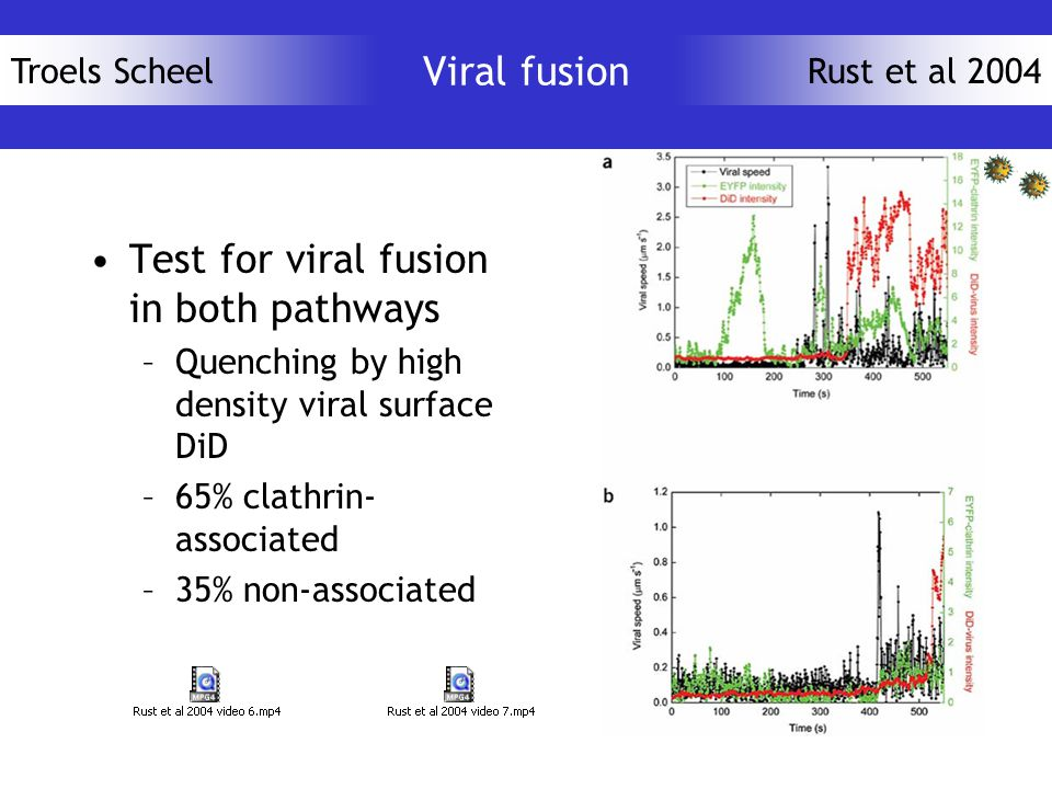 Troels ScheelRust et al 2004 Viral fusion Test for viral fusion in both pathways –Quenching by high density viral surface DiD –65% clathrin- associated –35% non-associated