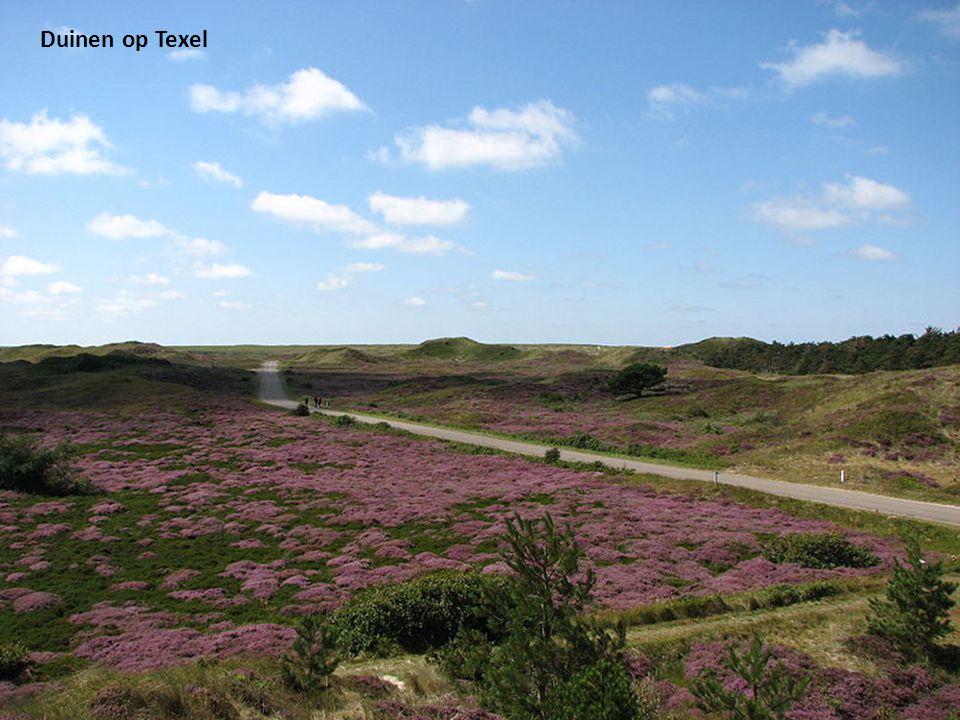 de Wadden eilanden. van Nederland tot Denemarken. Muziek: Enya. Productie: Jan Vos.