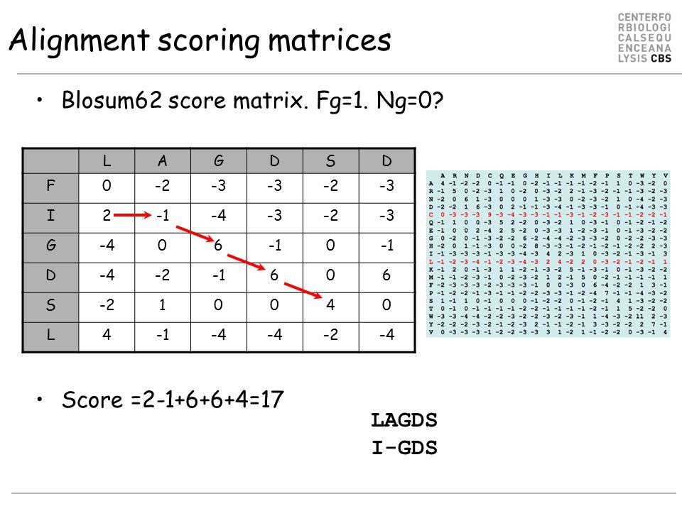 Alignment scoring matrices Blosum62 score matrix. Fg=1. Ng=0? Score =2-1+6+6+4=17 LAGDSD F0-2-3 -2-3 I2-4-3-2-3 G-4060 D-4-2606 S-210040 L4-4 -2-4 LAG