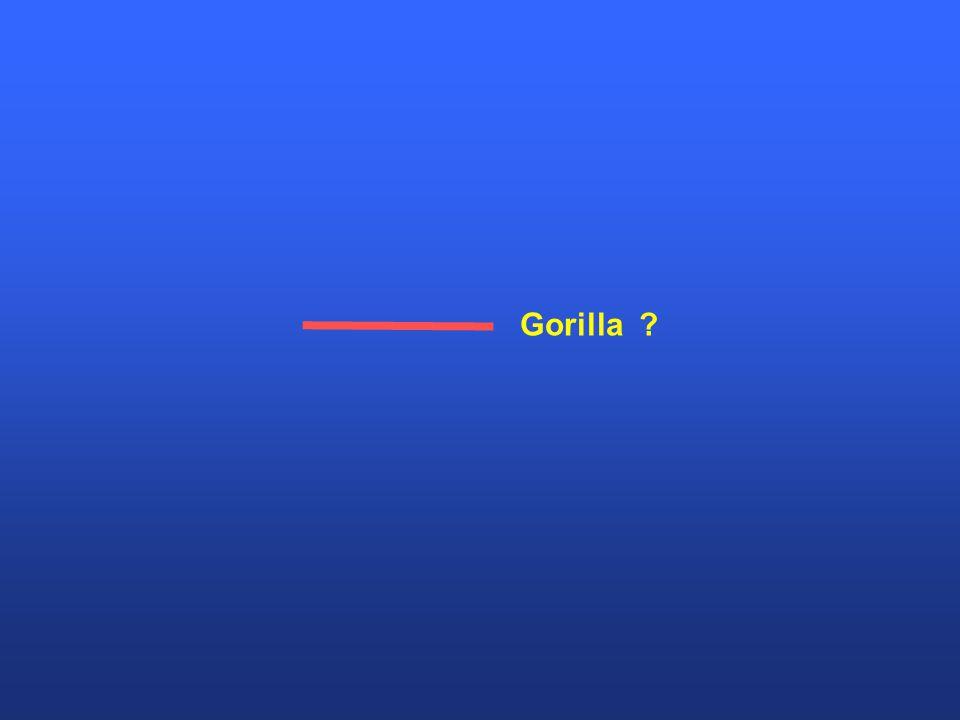 Gorilla ?