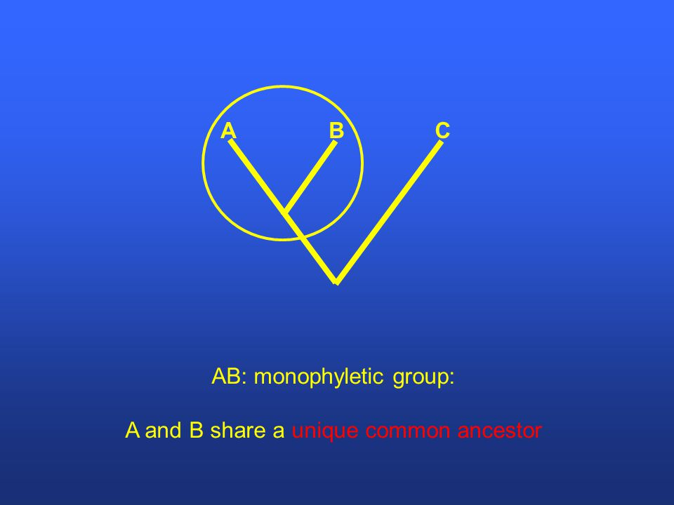 CBA AB: monophyletic group: A and B share a unique common ancestor