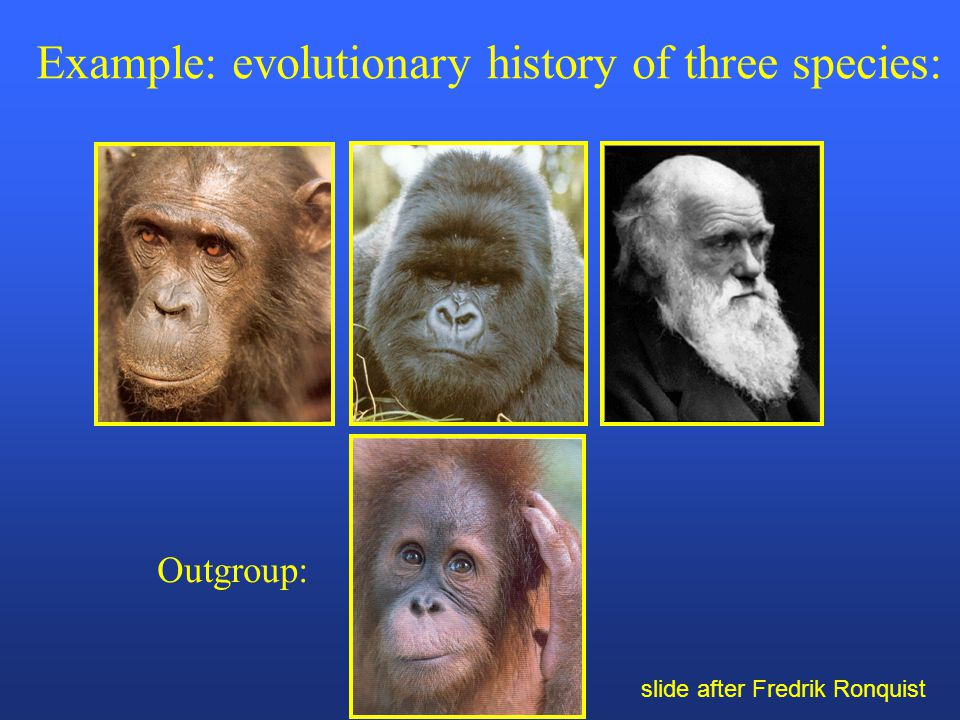 Outgroup: Example: evolutionary history of three species: slide after Fredrik Ronquist