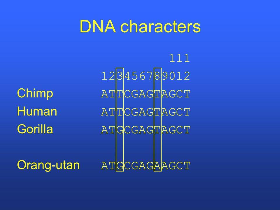 DNA characters 111 123456789012 Chimp ATTCGAGTAGCT Human ATTCGAGTAGCT Gorilla ATGCGAGTAGCT Orang-utan ATGCGAGAAGCT