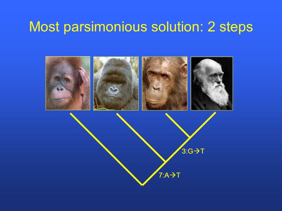 Most parsimonious solution: 2 steps 3:G  T 7:A  T