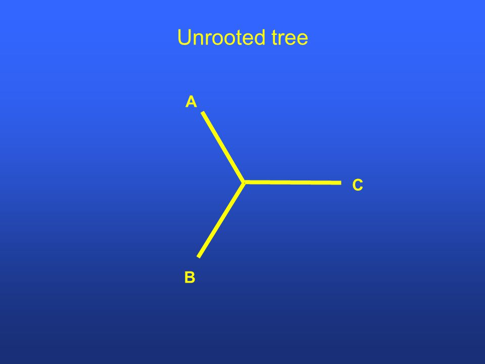 A B C Unrooted tree