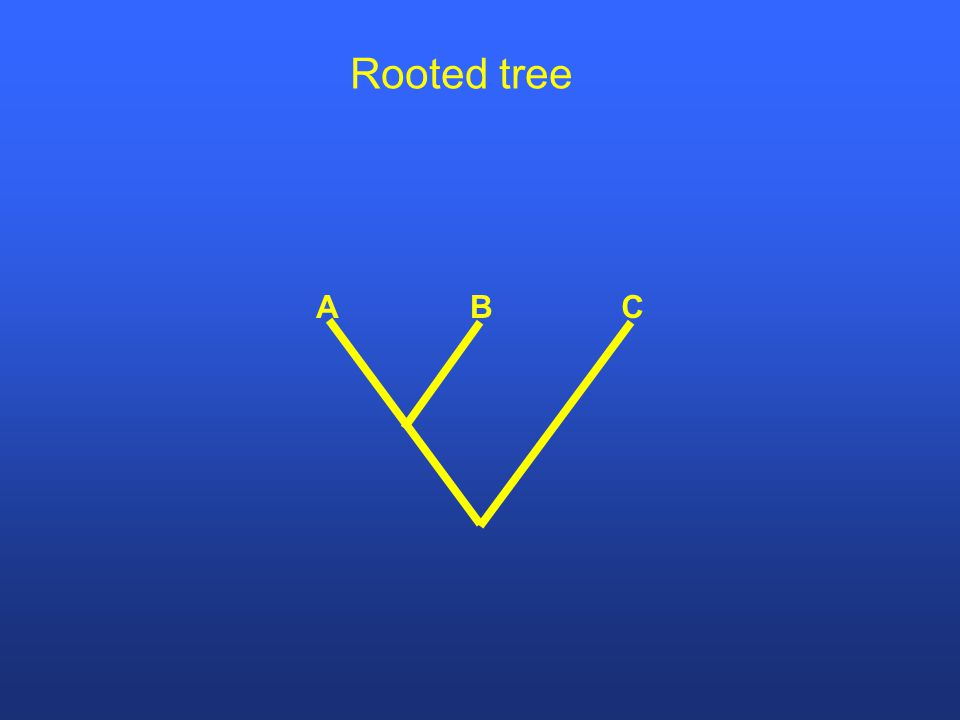 CBA Rooted tree