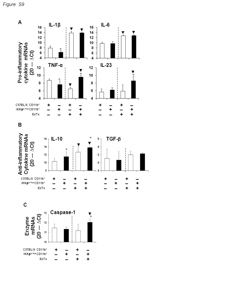 Pro-inflammatory cytokine mRNAs (20 ― ∆Ct) Anti-inflammatory Cytokine mRNAs (20 ― ∆Ct) IL-1βIL-6 C57BL/6 CD11b + IKK  Δ Mye CD11b + ++–– +–+– ––++ EdTx ++–– +–+– ––++ * ▼ ▼ ▼ ▼ Enzyme mRNAs (20 ― ∆Ct) Caspase-1 * ▼ IL-10 TGF-  * * ▼ ▼ Figure S9 TNF-αIL-23 ▼ ▼ * * ▼ * C57BL/6 CD11b + IKK  Δ Mye CD11b + ++–– +–+– ––++ EdTx ++–– +–+– ––++ C57BL/6 CD11b + IKK  Δ Mye CD11b + ++–– +–+– ––++ EdTx A B C