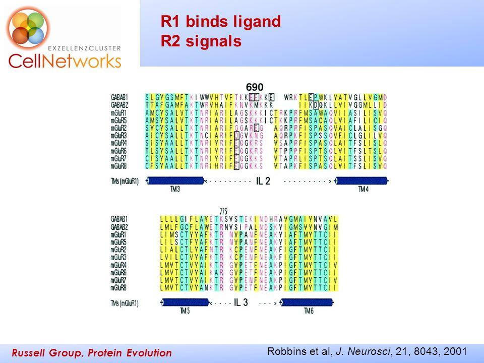 Russell Group, Protein Evolution _________ ____ Robbins et al, J. Neurosci, 21, 8043, 2001 R1 binds ligand R2 signals