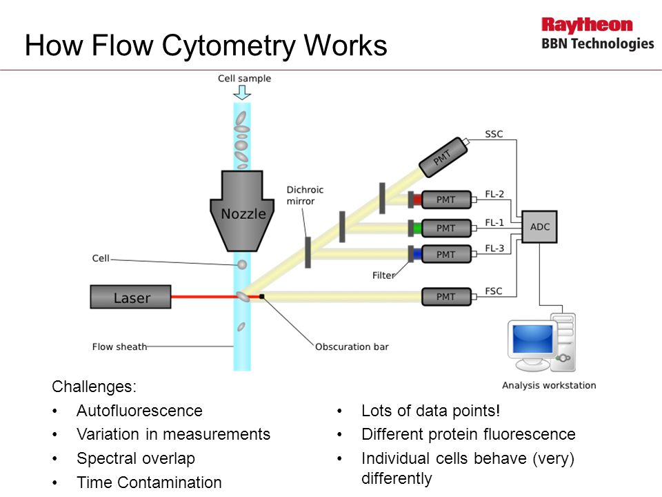How Flow Cytometry Works Challenges: Autofluorescence Variation in measurements Spectral overlap Time Contamination Lots of data points.
