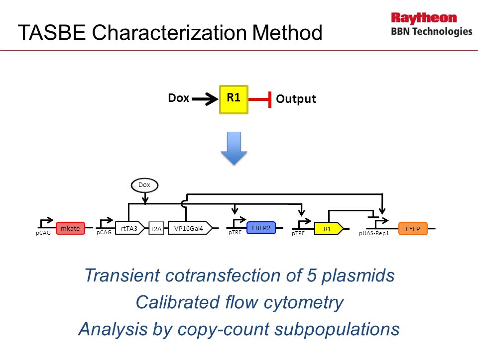 TASBE Characterization Method Transient cotransfection of 5 plasmids Calibrated flow cytometry Analysis by copy-count subpopulations Output Dox R1 pCAG Dox T2A rtTA3VP16Gal4 pTRE EBFP2 pTRE R1 pUAS-Rep1 EYFP pCAG mkate pCAG