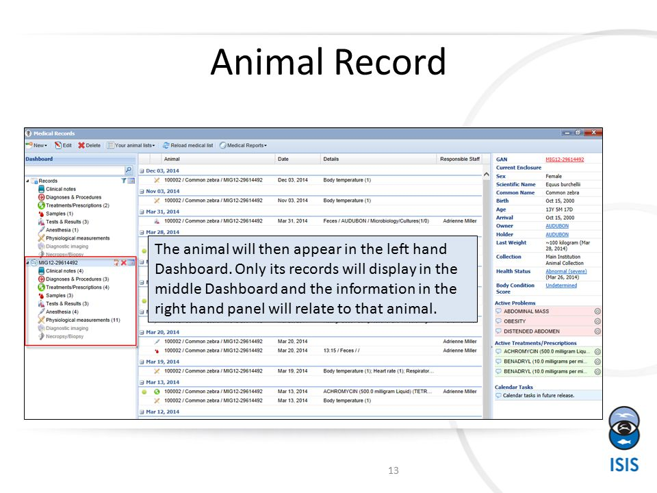 Animal Record 13 The animal will then appear in the left hand Dashboard.