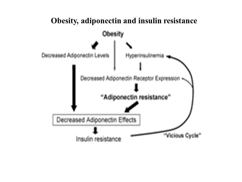 Obesity, adiponectin and insulin resistance