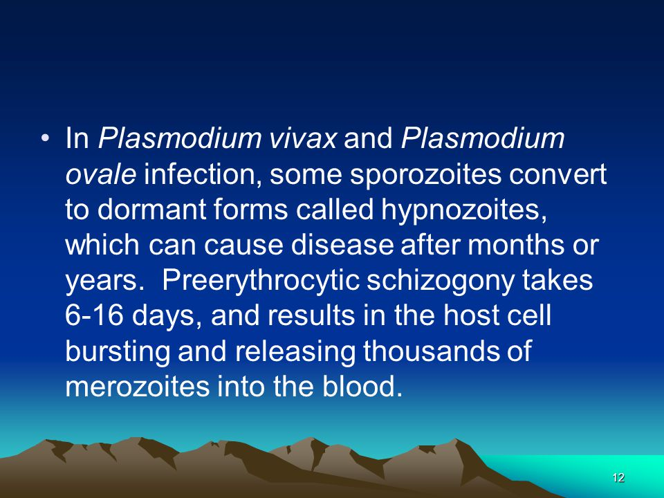 12 In Plasmodium vivax and Plasmodium ovale infection, some sporozoites convert to dormant forms called hypnozoites, which can cause disease after months or years.