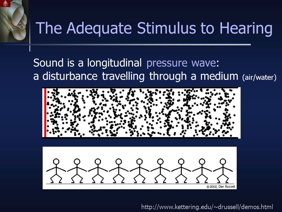 Sound is a longitudinal pressure wave: a disturbance travelling through a medium (air/water) The Adequate Stimulus to Hearing http://www.kettering.edu/~drussell/demos.html