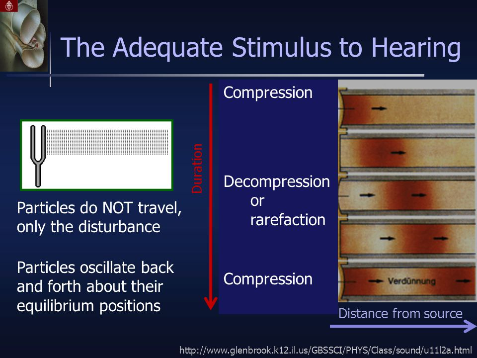 The Adequate Stimulus to Hearing http://www.glenbrook.k12.il.us/GBSSCI/PHYS/Class/sound/u11l2a.html Particles do NOT travel, only the disturbance Particles oscillate back and forth about their equilibrium positions Compression Decompression or rarefaction Compression Distance from source Duration