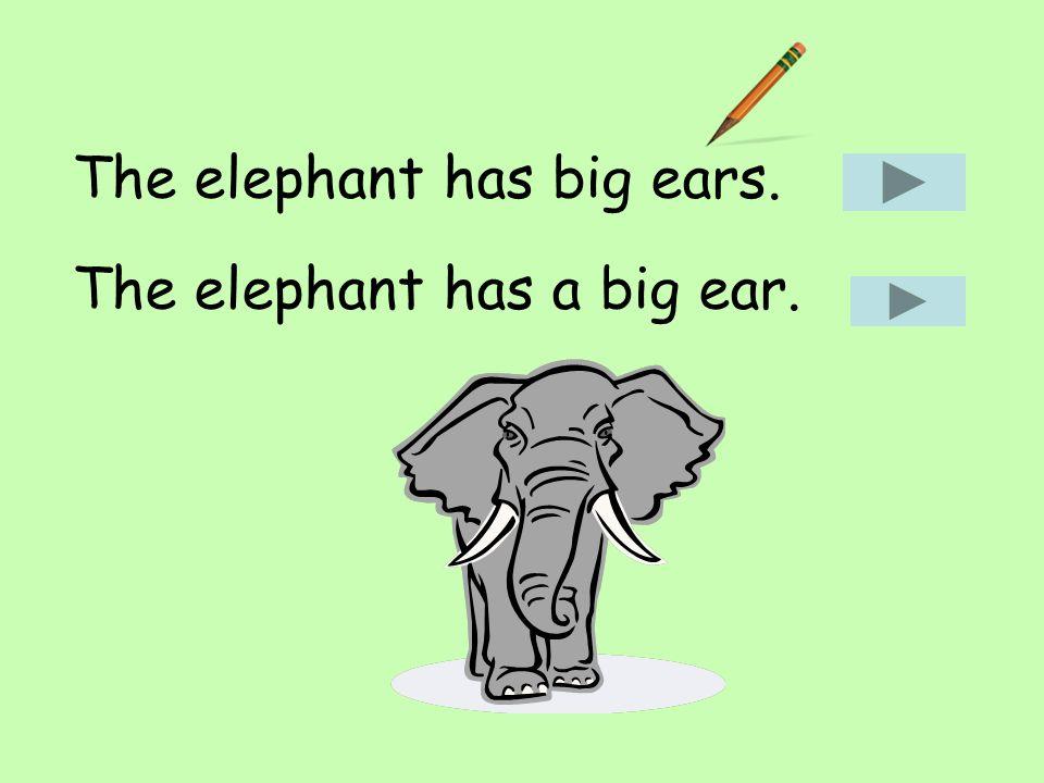 The elephant has big ears. The elephant has a big ear.