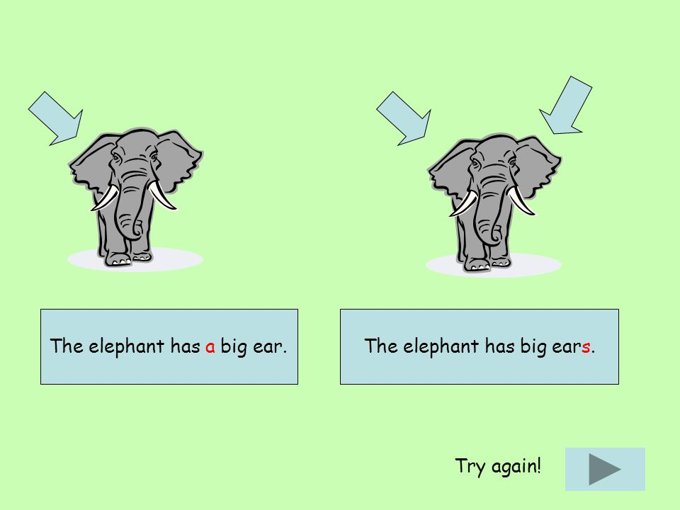 The elephant has a big ear.The elephant has big ears. Try again!