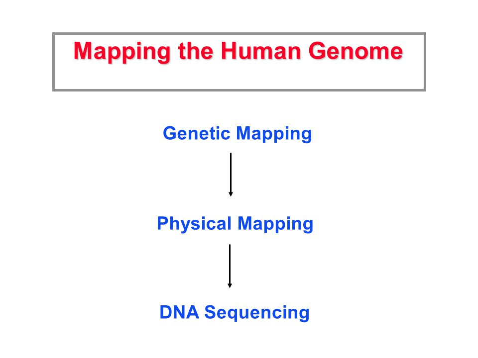 Mapping the Human Genome Genetic Mapping Physical Mapping DNA Sequencing