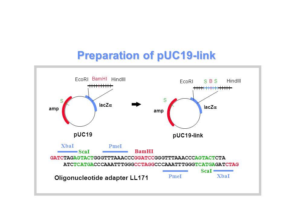 Preparation of pUC19-link GATCTAGAGTACTGGGTTTAAACCCGGATCCGGGTTTAAACCCAGTACTCTA ATCTCATGACCCAAATTTGGGCCTAGGCCCAAATTTGGGTCATGAGATCTAG XbaI ScaI BamHI PmeI Oligonucleotide adapter LL171 pUC19-link EcoRI HindIII B lacZ  amp S S S EcoRI HindIII BamHI lacZ  amp pUC19 S