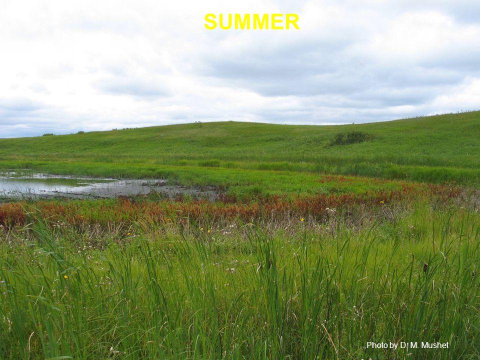SUMMER Photo by D. M. Mushet