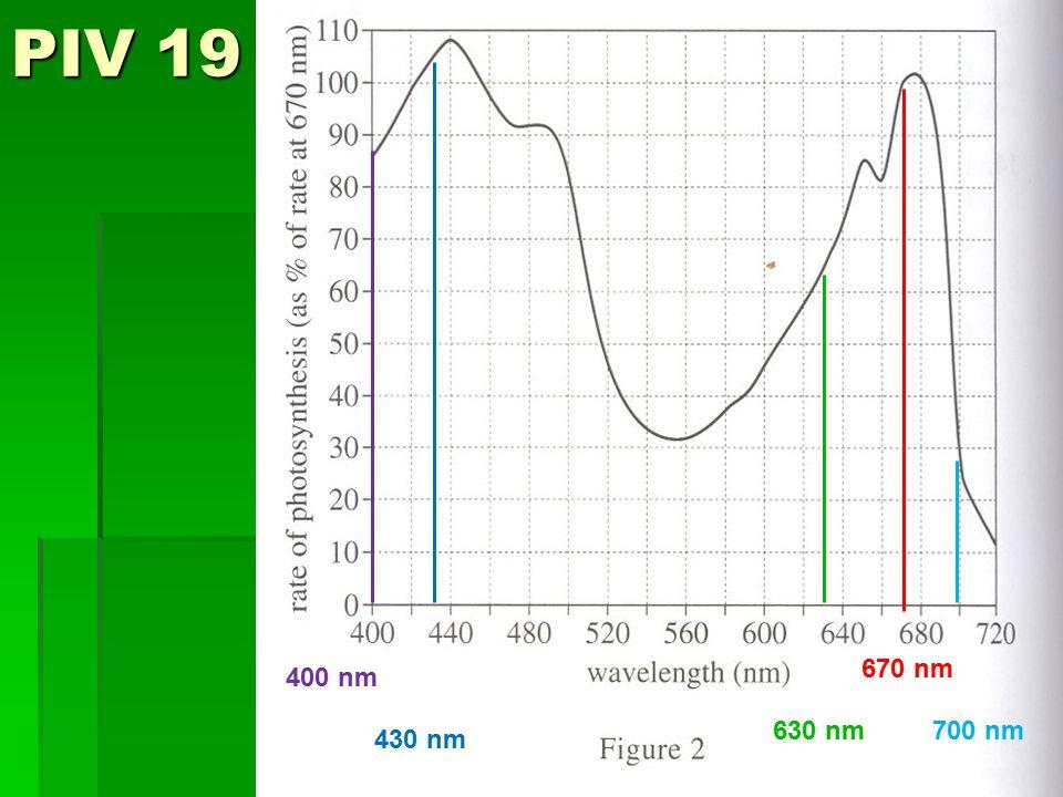 PIV 19 700 nm 430 nm 400 nm 670 nm 630 nm