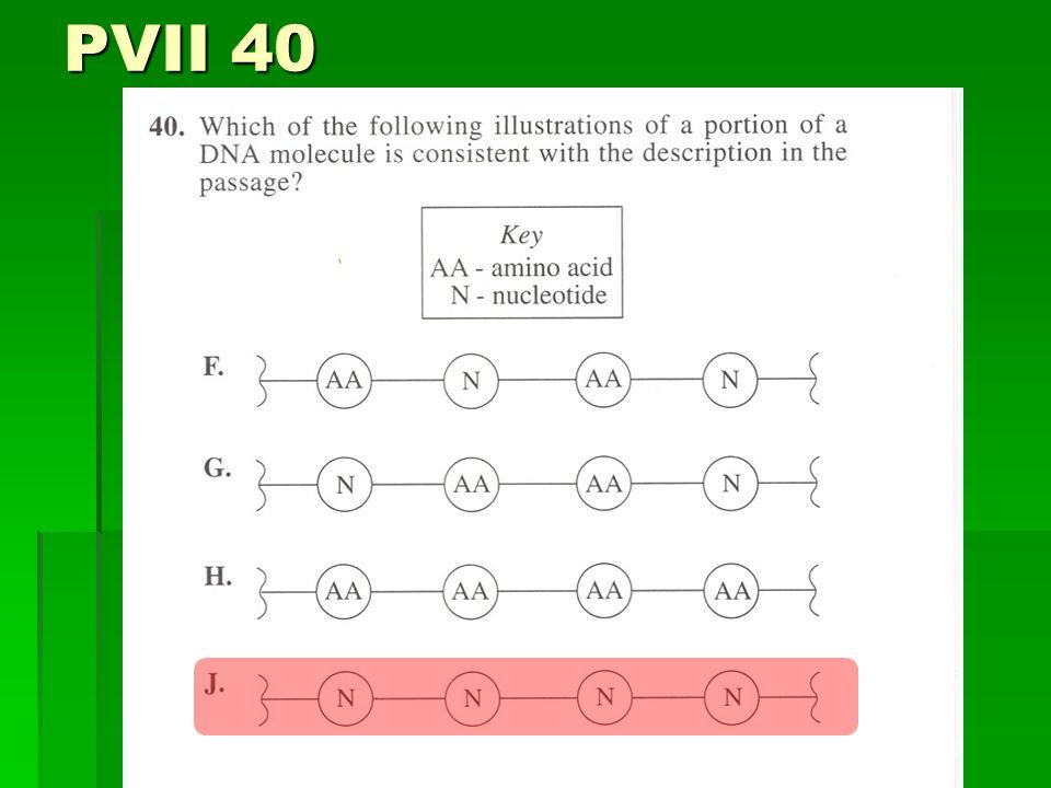 PVII 40