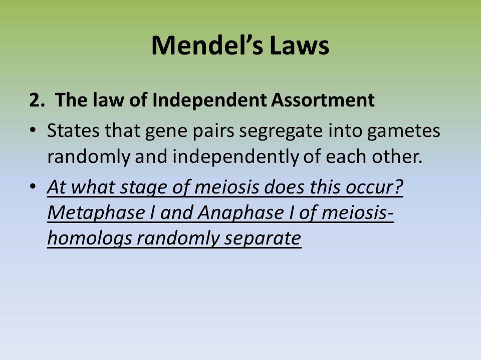 Mendel's Laws 2.
