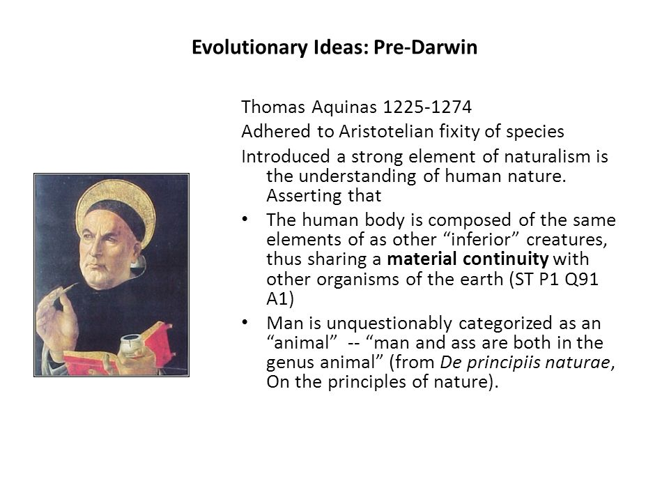 Evolutionary Ideas: Pre-Darwin Thomas Aquinas 1225-1274 Adhered to Aristotelian fixity of species Introduced a strong element of naturalism is the understanding of human nature.