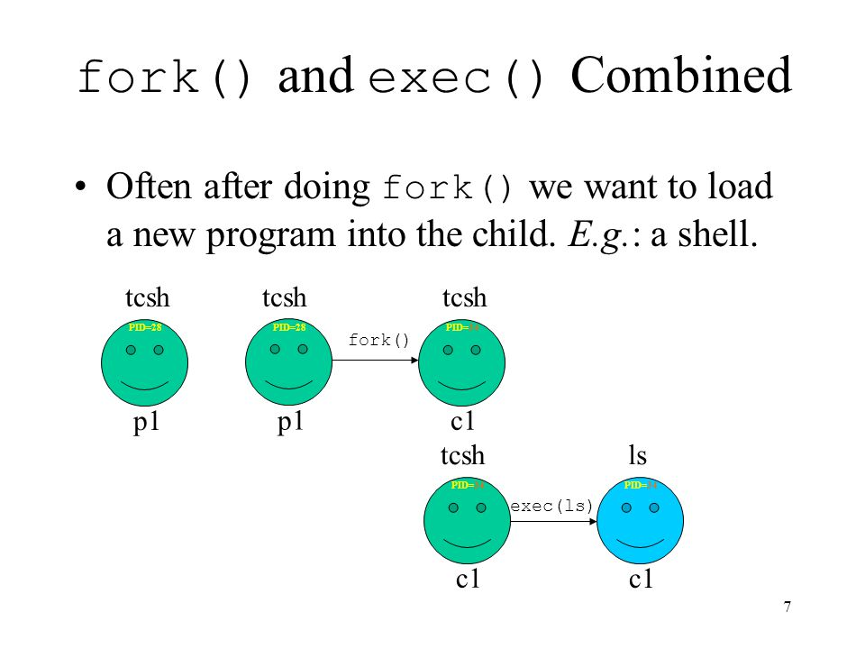 7 fork() and exec() Combined Often after doing fork() we want to load a new program into the child.