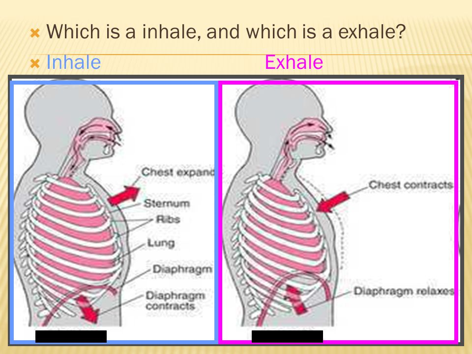  Which is a inhale, and which is a exhale  InhaleExhale AB AB