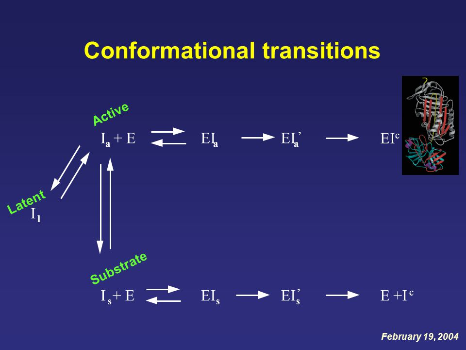 Conformational transitions I l I s + EEI s s ' E +I c I a + EEI a a ' EI c Active Substrate Latent February 19, 2004