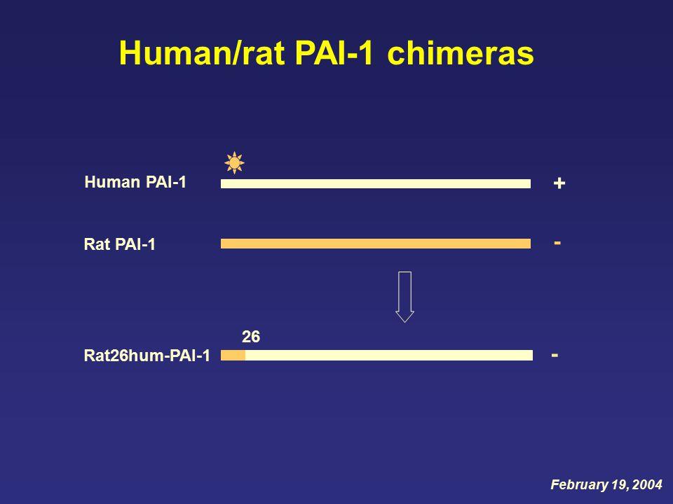+ Human PAI-1 - Rat PAI-1 Rat26hum-PAI-1 26 - Human/rat PAI-1 chimeras February 19, 2004