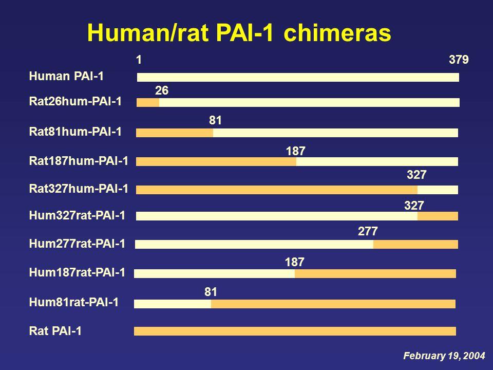 26 187 1379 81 277 327 187 327 Human PAI-1 Rat PAI-1 Rat26hum-PAI-1 Rat81hum-PAI-1 Rat187hum-PAI-1 Rat327hum-PAI-1 Hum81rat-PAI-1 Hum187rat-PAI-1 Hum277rat-PAI-1 Hum327rat-PAI-1 Human/rat PAI-1 chimeras February 19, 2004