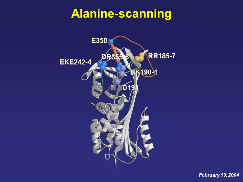 Alanine-scanning E350 EKE242-4 RR185-7 HK190-1 D193 DR355-6 February 19, 2004