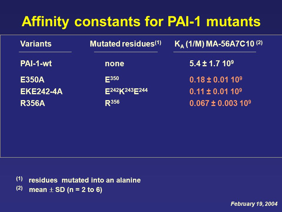Variants Mutated residues (1) K A (1/M) MA-56A7C10 (2) PAI-1-wtnone5.4 ± 1.7 10 9 (1) residues mutated into an alanine (2) mean  SD (n = 2 to 6) EKE242-4AE 242 K 243 E 244 0.11 ± 0.01 10 9 R356AR 356 0.067 ± 0.003 10 9 E350AE 350 0.18 ± 0.01 10 9 Affinity constants for PAI-1 mutants February 19, 2004