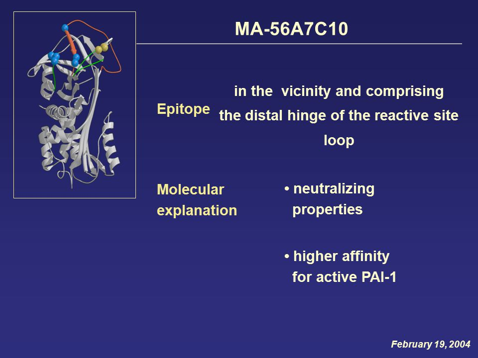 Molecular explanation neutralizing properties MA-56A7C10 Epitope in the vicinity and comprising the distal hinge of the reactive site loop higher affinity for active PAI-1 February 19, 2004