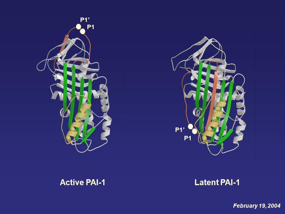 P1' Active PAI-1 P1 Latent PAI-1 P1' P1 February 19, 2004