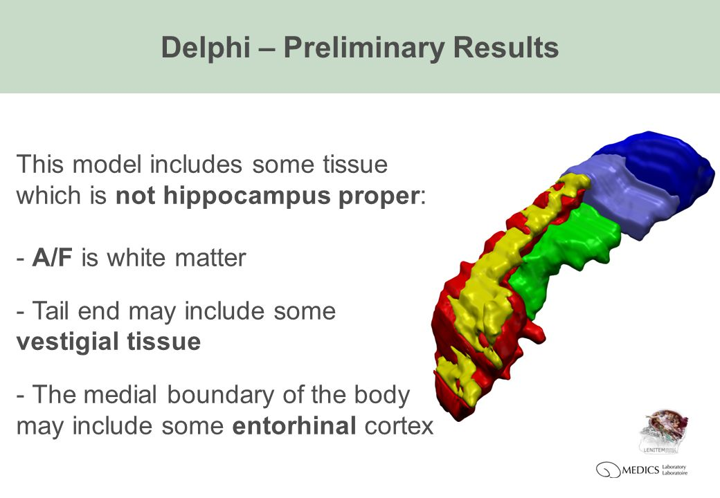Delphi – Preliminary Results This model includes some tissue which is not hippocampus proper: - A/F is white matter - Tail end may include some vestigial tissue - The medial boundary of the body may include some entorhinal cortex